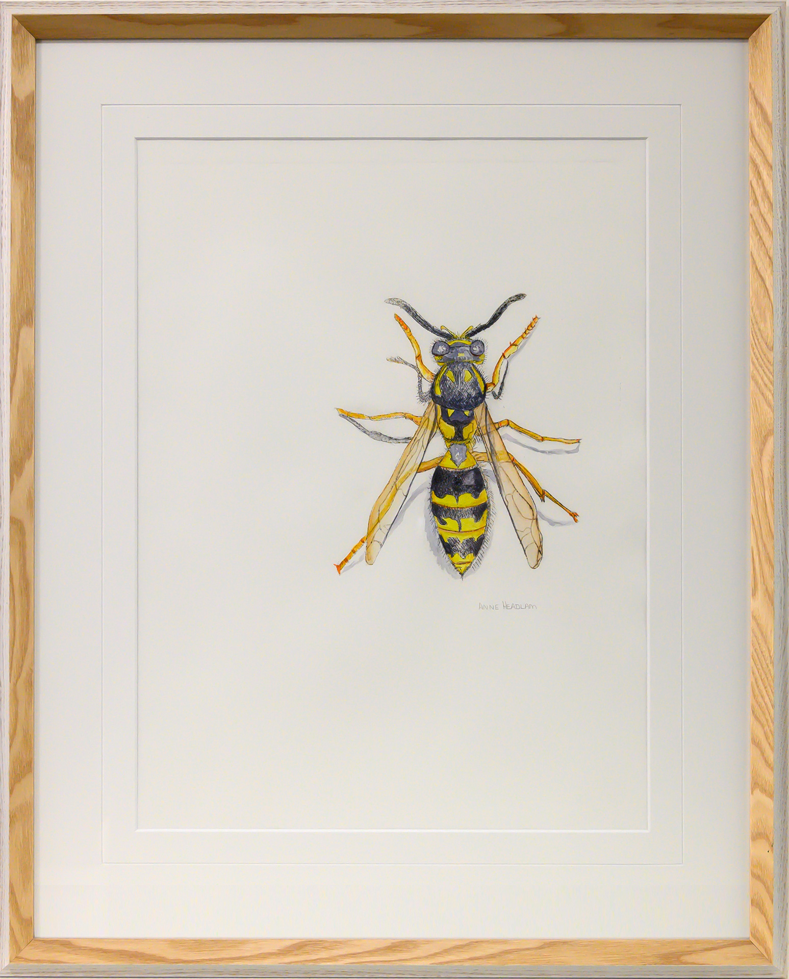 Framed artwork of a yellow and black European wasp by Anne Headlam