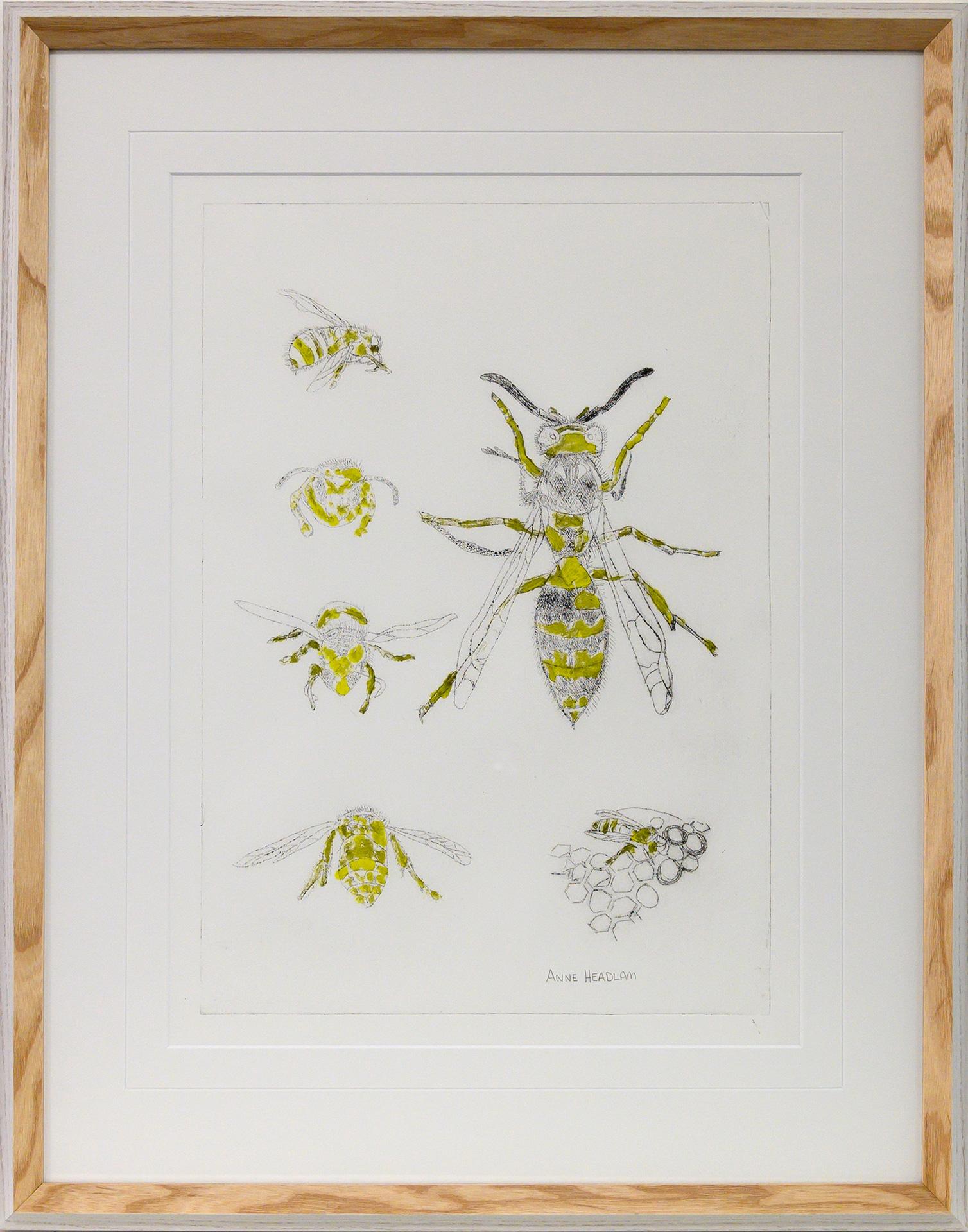 Framed artwork of European Wasp specimens by Anne Headlam
