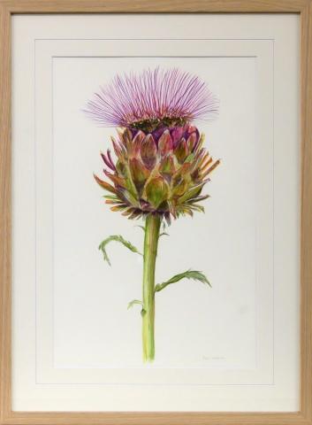 Framed artwork of a purple artichoke thistle by Anne Headlam