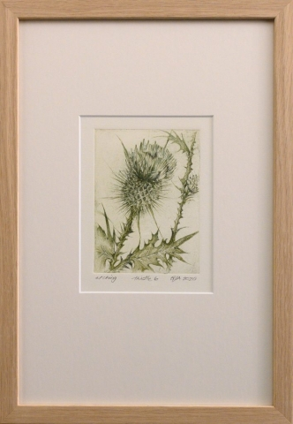 Framed artwork by Libby Altschwager of a bottle green image of a close up of a Scotch Thistle